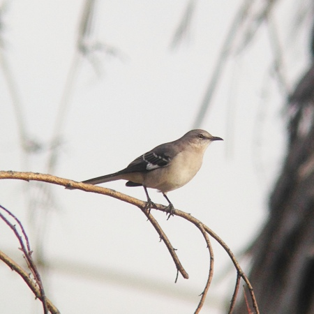 Bird on a stick - 50x