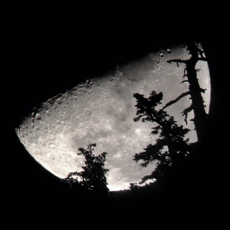Moon through trees 2015-11-01